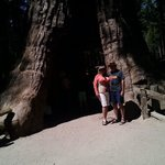 Hinthers at Giant Sequoia!