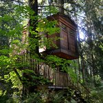 The Burl Tree House