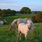 Ponies at Hill Brook Farm
