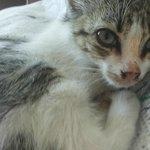 großes Herz auch für ganz kleine kranke Katzen