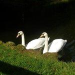 onze vrienden op de vijver