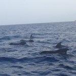 Pilot Whale watching. AMAZING!