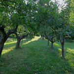 Manzanos jardín