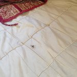 Spider walking over the bed
