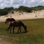 Beautiful wild horses.
