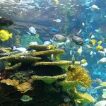 Rainbow Reef Exhibit