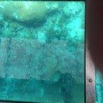 View in glass bottom boat