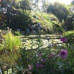 Scorci dal laghetto di Monet