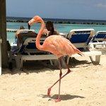 Friendly Flamingo on Island
