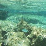 Elafonissi en plein mois d'aout! - snorkeling