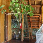 Tree growing in our tree house !! So cool !!!