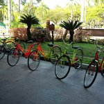 Old bicycles for rent at the Club