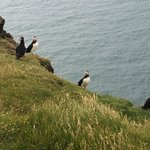 We even got to see Puffins!