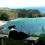 Our old Collie, Meg, at nearby Lantic Bay