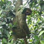 Sloth Hangin'
