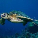 Puaco Reef