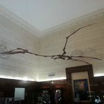 Pterosaur in entrance hall