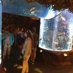 Aquariums partout
