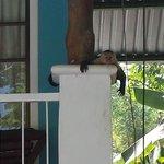 Monkeys visit the hotel