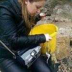 Penguin Feeding Experience