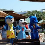 Family time with Dizzy the dolphin, shades the shark & stella