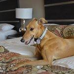 Photo de Grand Sierra Resort and Casino