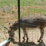 Lil Donkey