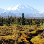 Denali on a clear morning in August. It was awe inspiring.