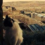 Cute hotel cat