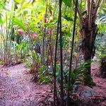 Foto de Hostel Tambopata