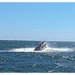 Hump back whale sighting