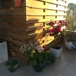 Roof-deck Terrace Flowers