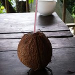 Fresh coconut prepared by charly