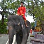 Elephant greeter