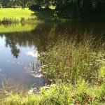 Fishing pond located centrally on the property