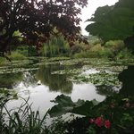 Monet's pond and waterlilies