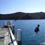 Enjoy a dive off Whangaparapara Wharf