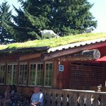 Goat's On the Roof at COOMBS!