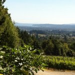Averill Creek Winery, awesome view of the Cowichan Valley