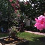 An amazingly tranquil garden on a main street