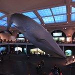 Sala dos animais marinhos