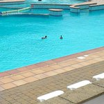 on site outside pool even on a dull day the ducks can enjoy it