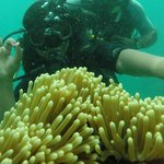With Anemones