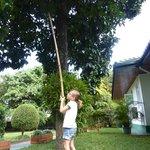 cueillette de mangouste dans le jardin
