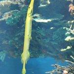 Рыбка-долгоносик (мои собственные названия рыб)