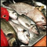 Vitrine de poissons frais