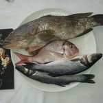 Every day fresh fish !!!!