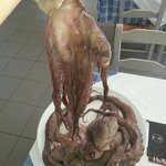 Octopus. .