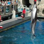 Vancouver Acquarium, dolphin show