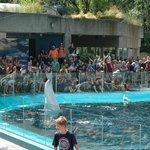 Vancouver Acquarium, Beluga show